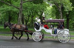 Central_park_horse_carriage