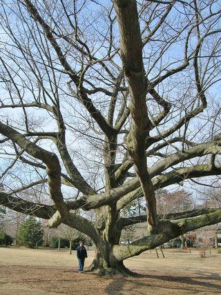 NewHaven.Tree